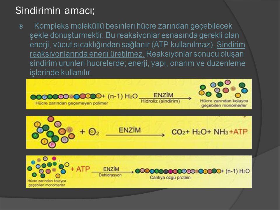 Sindirimin amacı;  Kompleks moleküllü besinleri hücre zarından geçebilecek şekle dönüştürmektir. Bu reaksiyonlar esnasında gerekli olan enerji, vücut