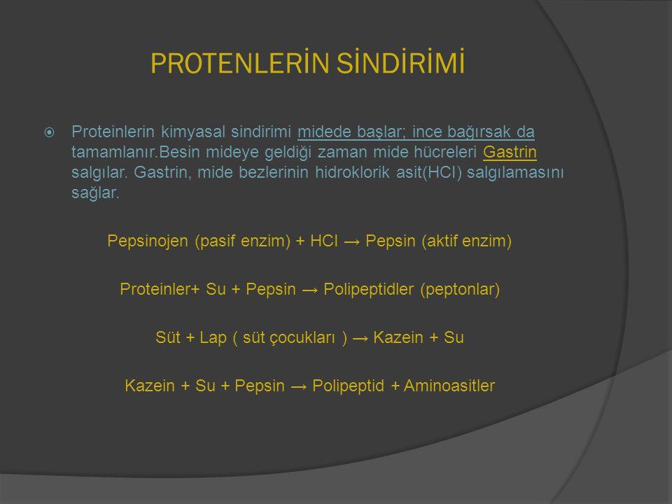 PROTENLERİN SİNDİRİMİ  Proteinlerin kimyasal sindirimi midede başlar; ince bağırsak da tamamlanır.Besin mideye geldiği zaman mide hücreleri Gastrin s