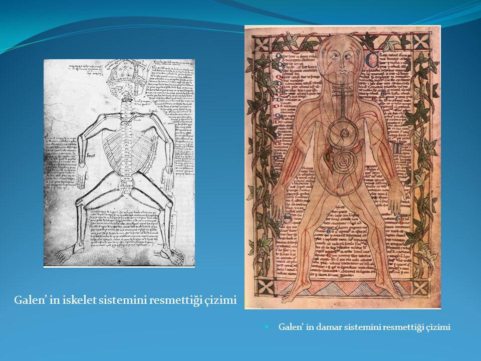 Galen' in damar sistemini resmettiği çizimi Galen' in iskelet sistemini resmettiği çizimi