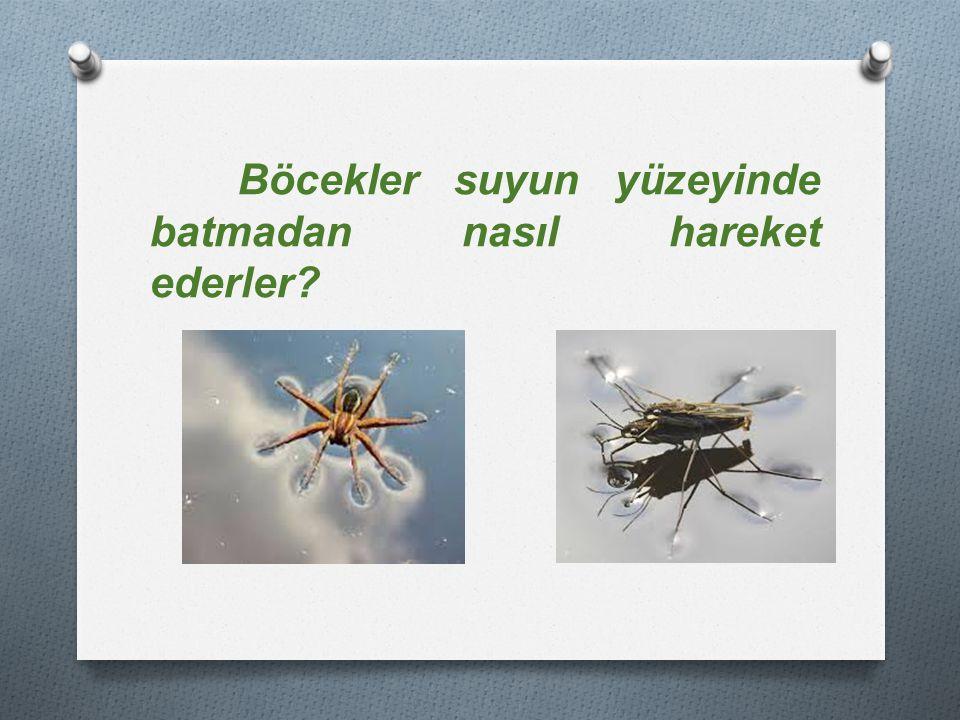 Böcekler suyun yüzeyinde batmadan nasıl hareket ederler?