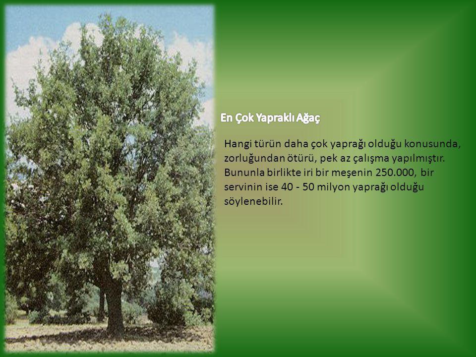 Hangi türün daha çok yaprağı olduğu konusunda, zorluğundan ötürü, pek az çalışma yapılmıştır. Bununla birlikte iri bir meşenin 250.000, bir servinin i