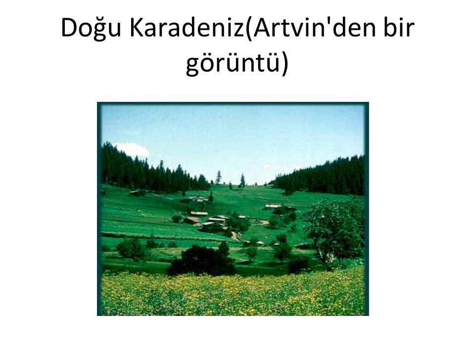 Doğu Karadeniz(Artvin'den bir görüntü)