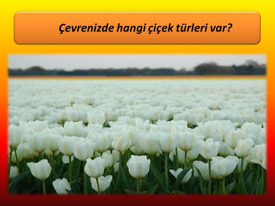 Çiçekleri sever misiniz? Çevrenizde hangi çiçek türleri var?