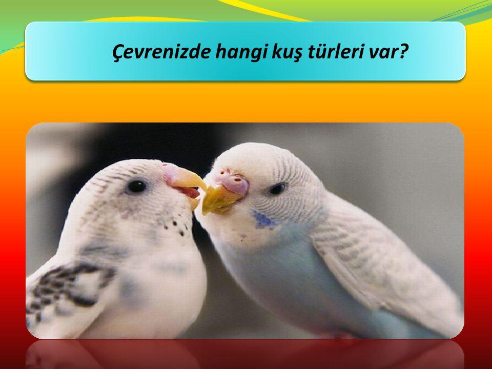 Kuşları sever misiniz? Çevrenizde hangi kuş türleri var?