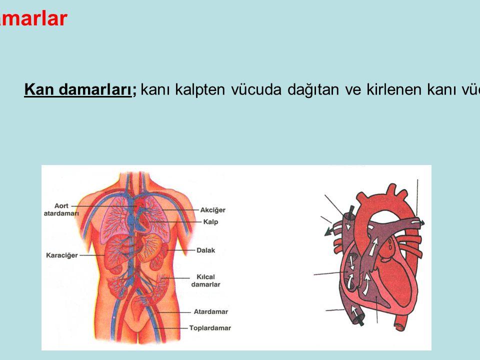 Damarlar Kan damarları; kanı kalpten vücuda dağıtan ve kirlenen kanı vücuttan kalbe taşıyan, dolaşım sistemine ait elemanlardır.