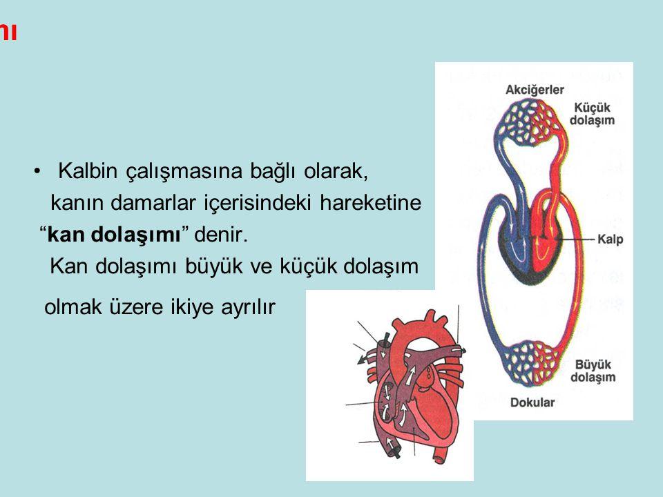 Kan Dolaşımı •Kalbin çalışmasına bağlı olarak, kanın damarlar içerisindeki hareketine kan dolaşımı denir.
