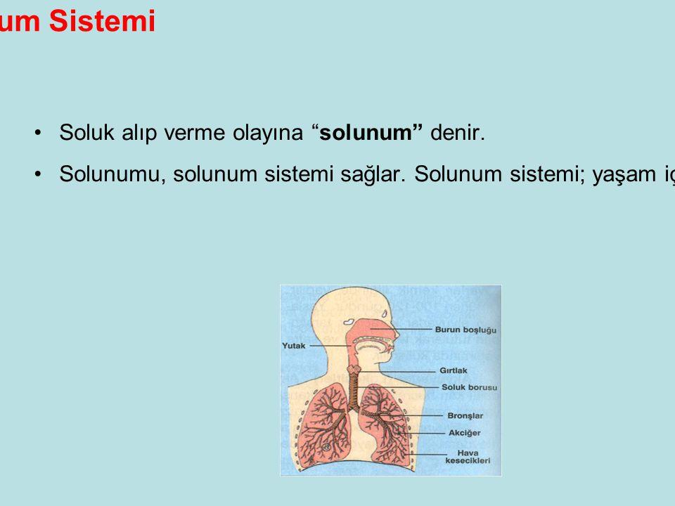 Solunum Sistemi •Soluk alıp verme olayına solunum denir.