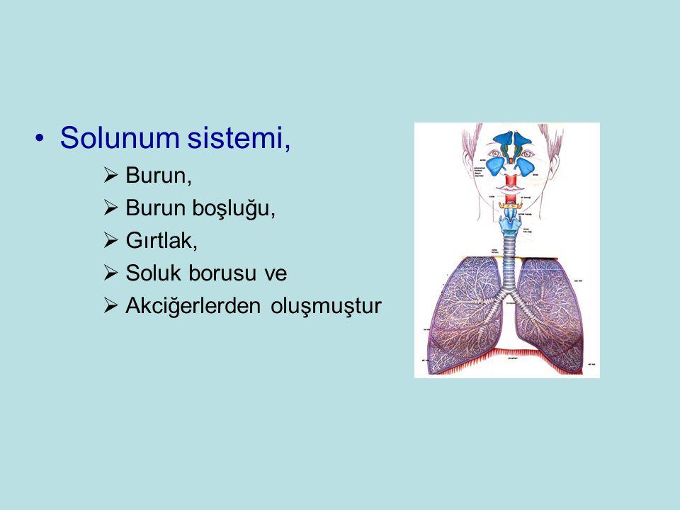 •Solunum sistemi,  Burun,  Burun boşluğu,  Gırtlak,  Soluk borusu ve  Akciğerlerden oluşmuştur