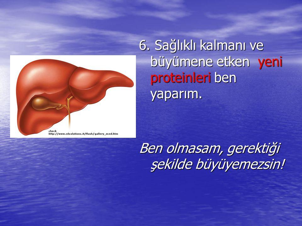 6.Sağlıklı kalmanı ve büyümene etken yeni proteinleri ben yaparım.