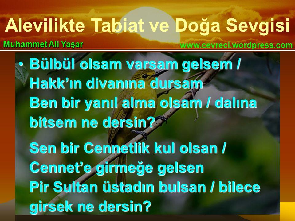 Alevilikte Tabiat ve Doğa Sevgisi www.cevreci.wordpress.com Muhammet Ali Yaşar •Bülbül olsam varsam gelsem / Hakk'ın divanına dursam Ben bir yanıl alma olsam / dalına bitsem ne dersin.