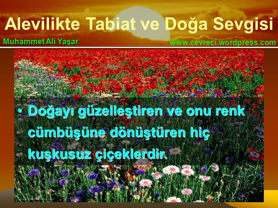 Alevilikte Tabiat ve Doğa Sevgisi www.cevreci.wordpress.com Muhammet Ali Yaşar •Doğayı güzelleştiren ve onu renk cümbüşüne dönüştüren hiç kuşkusuz çiçeklerdir.