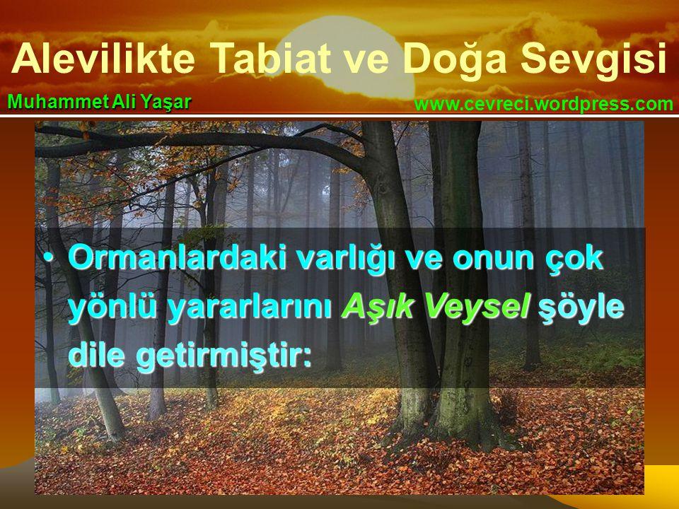 Alevilikte Tabiat ve Doğa Sevgisi www.cevreci.wordpress.com Muhammet Ali Yaşar •Ormanlardaki varlığı ve onun çok yönlü yararlarını Aşık Veysel şöyle dile getirmiştir: •Ormanlardaki varlığı ve onun çok yönlü yararlarını Aşık Veysel şöyle dile getirmiştir: