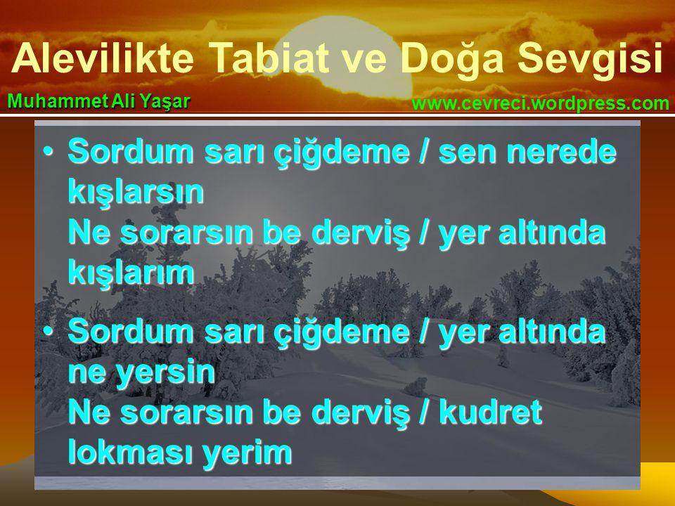 Alevilikte Tabiat ve Doğa Sevgisi www.cevreci.wordpress.com Muhammet Ali Yaşar •Sordum sarı çiğdeme / sen nerede kışlarsın Ne sorarsın be derviş / yer