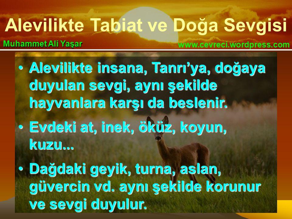 Alevilikte Tabiat ve Doğa Sevgisi www.cevreci.wordpress.com Muhammet Ali Yaşar •Alevilikte insana, Tanrı'ya, doğaya duyulan sevgi, aynı şekilde hayvanlara karşı da beslenir.