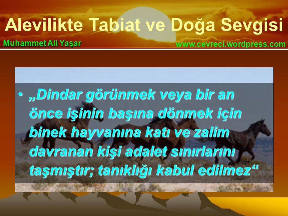 """Alevilikte Tabiat ve Doğa Sevgisi www.cevreci.wordpress.com Muhammet Ali Yaşar •""""Dindar görünmek veya bir an önce işinin başına dönmek için binek hayvanına katı ve zalim davranan kişi adalet sınırlarını taşmıştır; tanıklığı kabul edilmez"""