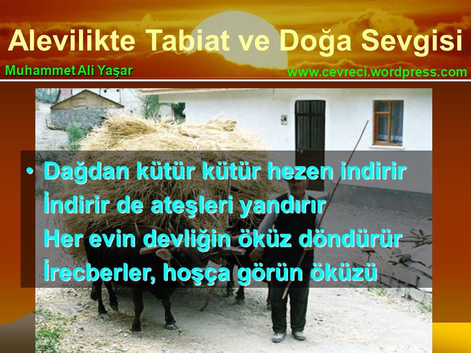 Alevilikte Tabiat ve Doğa Sevgisi www.cevreci.wordpress.com Muhammet Ali Yaşar •Dağdan kütür kütür hezen indirir İndirir de ateşleri yandırır Her evin devliğin öküz döndürür İrecberler, hoşça görün öküzü
