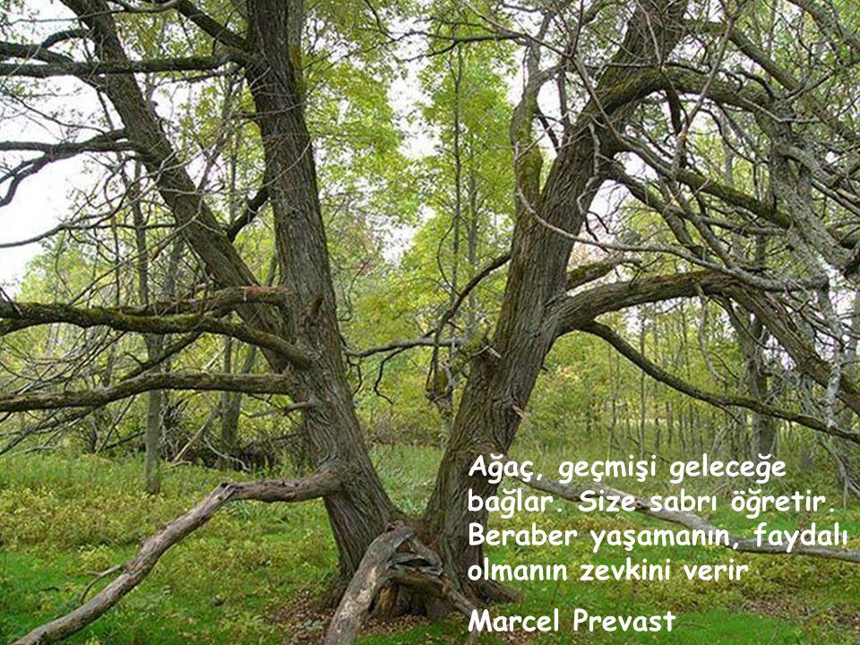 Tomurcuk derdinde olmayan ağaç, odundur. Necip Fazıl Kısakürek