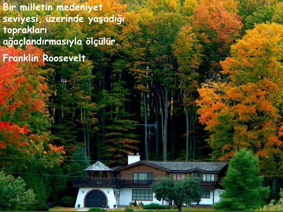 Ağaç, geçmişi geleceğe bağlar.Size sabrı öğretir.