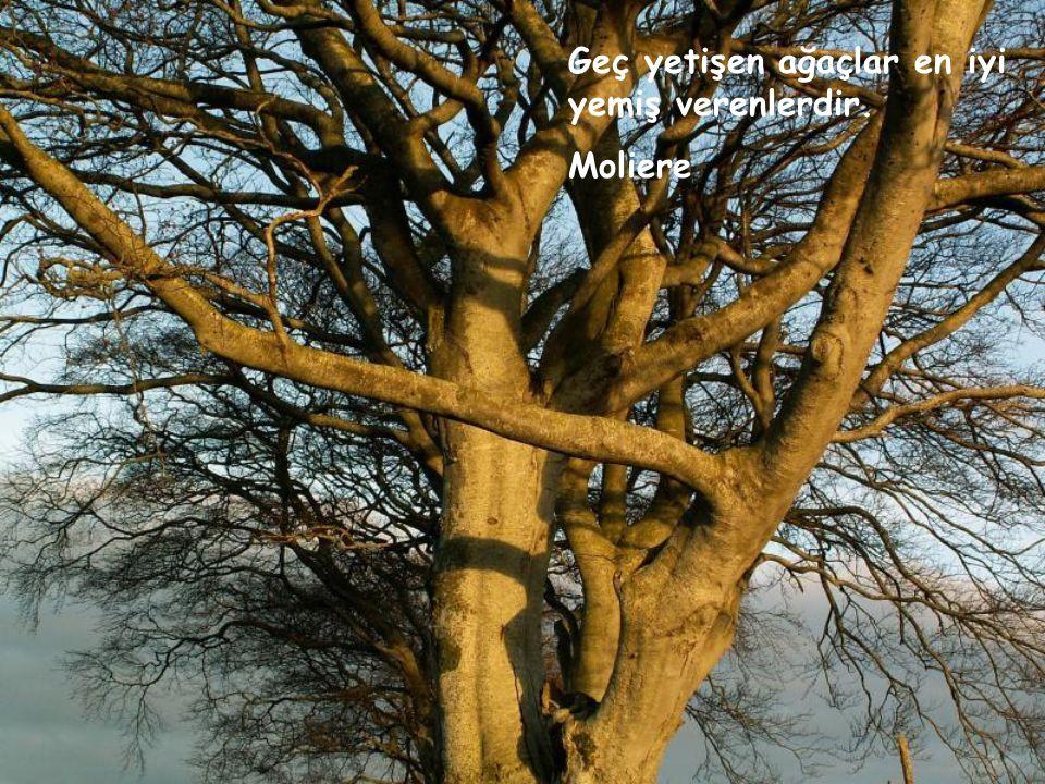 İyi ağaçtan talihli dal çıkar. Mevlana