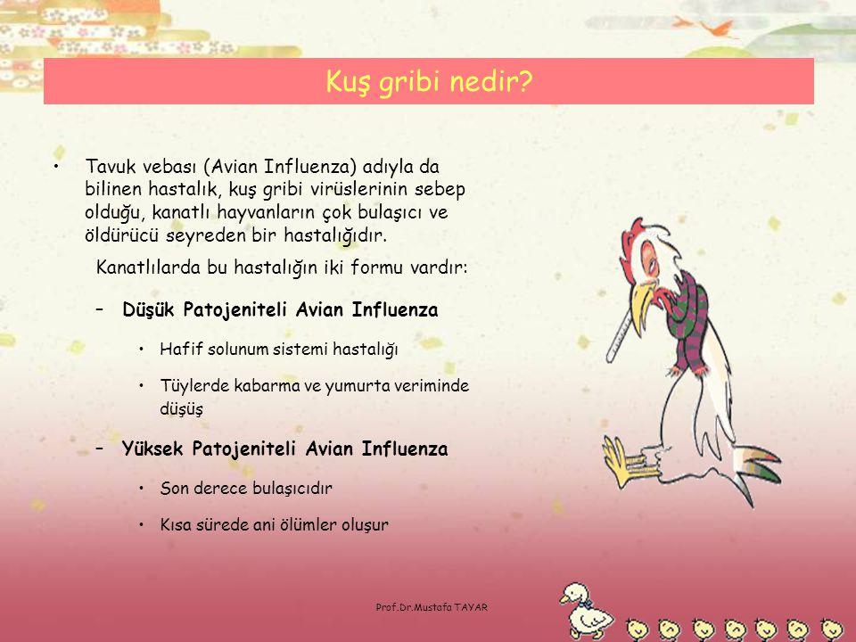 Prof.Dr.Mustafa TAYAR Kuş gribi nedir? •Tavuk vebası (Avian Influenza) adıyla da bilinen hastalık, kuş gribi virüslerinin sebep olduğu, kanatlı hayvan