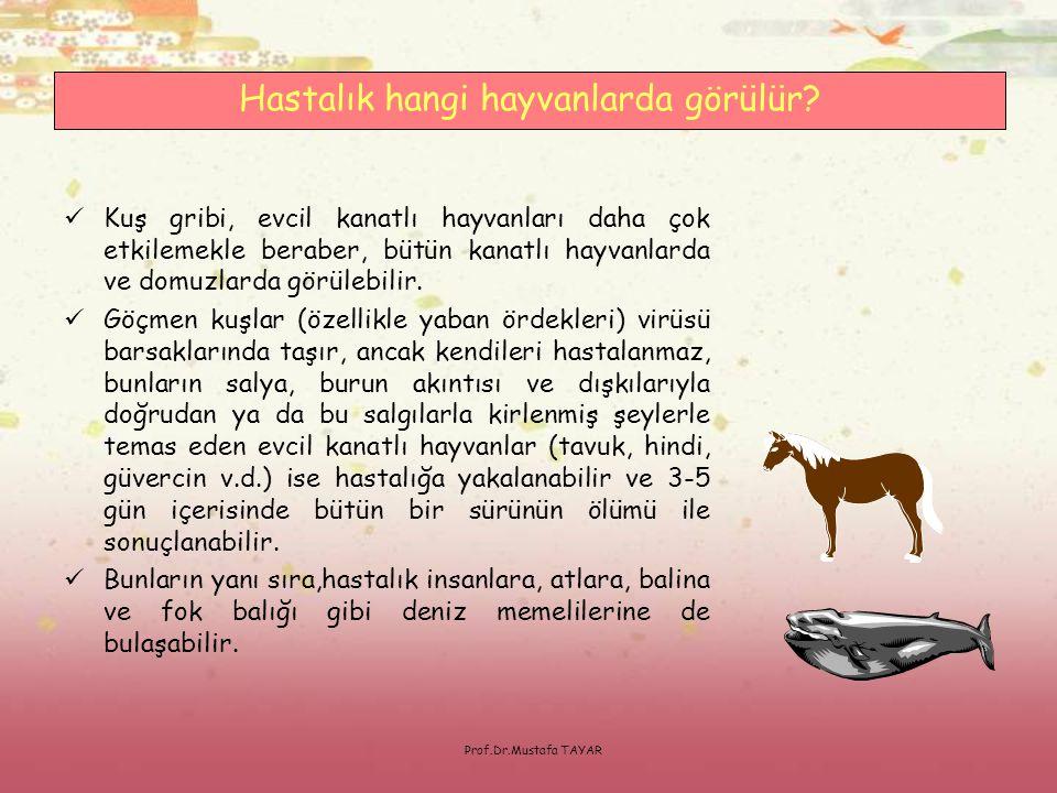 Prof.Dr.Mustafa TAYAR  Karantina bölgelerinde hasta ya da ölmüş hayvanlarla temas edenlerde; bu hayvanların bakımı, taşınması, beslenmesi ya da barınaklarının temizlenmesi ile ilgilenenlerde; ölmüş ya da hasta hayvanların itlafı sırasında gerekli korunma önlemlerini almadan görev alanlarda başka herhangi bir sebeple açıklanamayan:  38,5 o C'nin üzerinde yüksek ateş,  Boğaz ağrısı,  Kuru öksürük,  Yaygın kas ve eklem ağrıları,  Solunum güçlüğü ve zatürre belirtileri,  Nadiren karın ağrısı ve ishal  hastalığın belirtileri olarak değerlendirilmelidir.