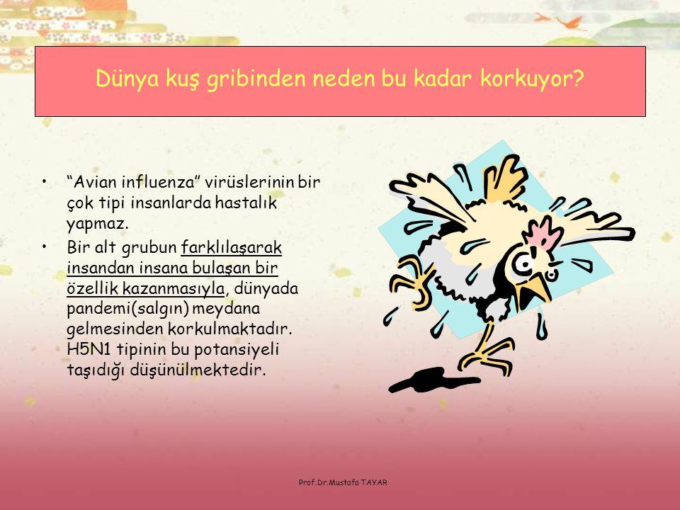 """Prof.Dr.Mustafa TAYAR •""""Avian influenza"""" virüslerinin bir çok tipi insanlarda hastalık yapmaz. •Bir alt grubun farklılaşarak insandan insana bulaşan b"""