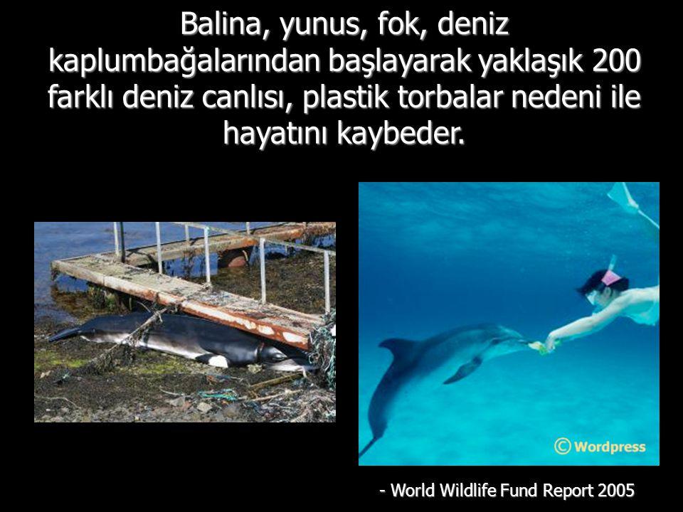 Balina, yunus, fok, deniz kaplumbağalarından başlayarak yaklaşık 200 farklı deniz canlısı, plastik torbalar nedeni ile hayatını kaybeder.