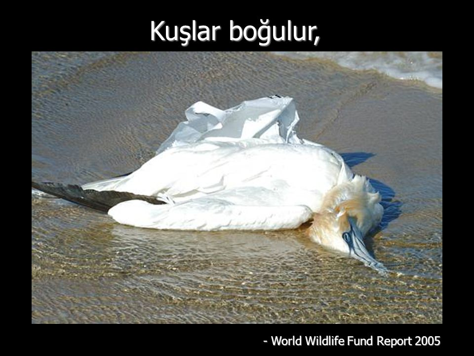 Kuşlar boğulur, - World Wildlife Fund Report 2005