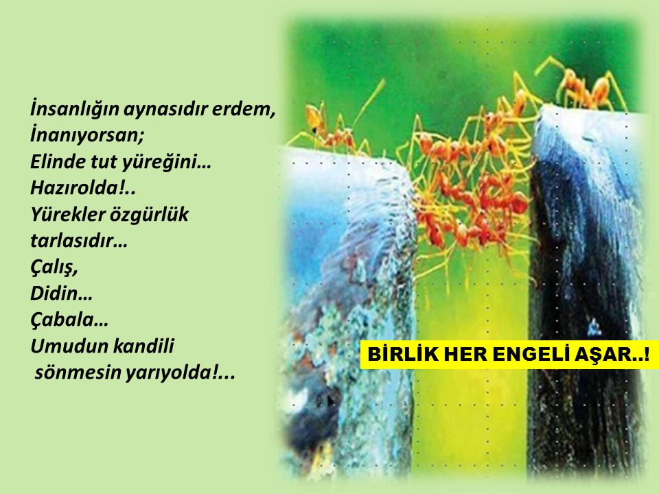 HA GAYRET!... Özgürce yaşam…; Akıl, izan, vicdan… pınarından sulanan!... Kula,kuldan değil!... Doğrudan… Doğadan!... Armağan!.. Metin : Mehmet Halil A