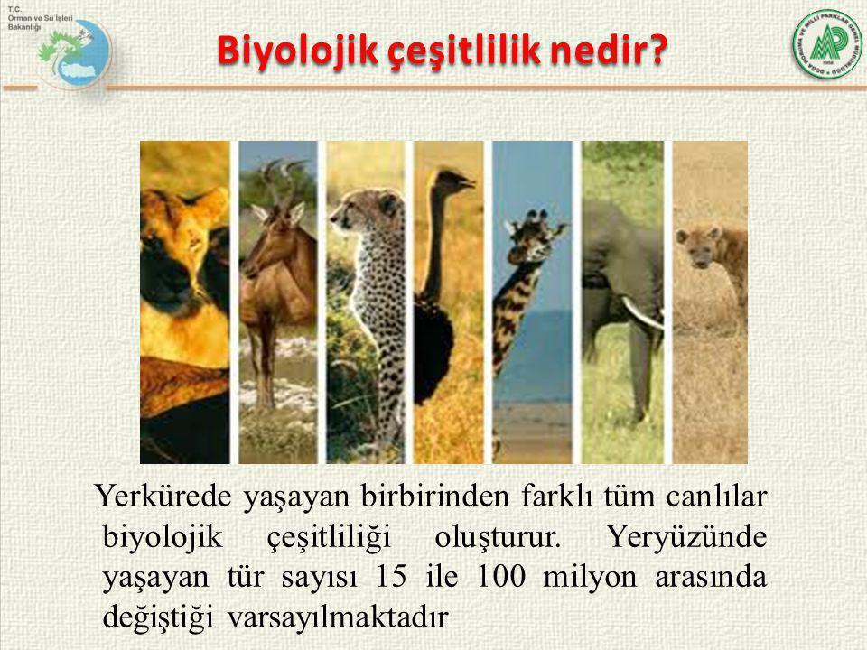 Biyolojik çeşitlilik nedir? Yerkürede yaşayan birbirinden farklı tüm canlılar biyolojik çeşitliliği oluşturur. Yeryüzünde yaşayan tür sayısı 15 ile 10