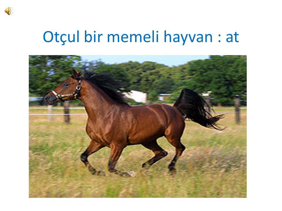 Atların erkeğine aygır, dişisine kısrak denir.