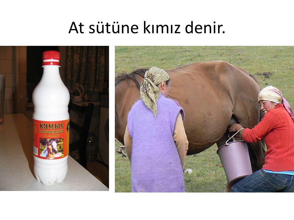 At sütüne kımız denir.