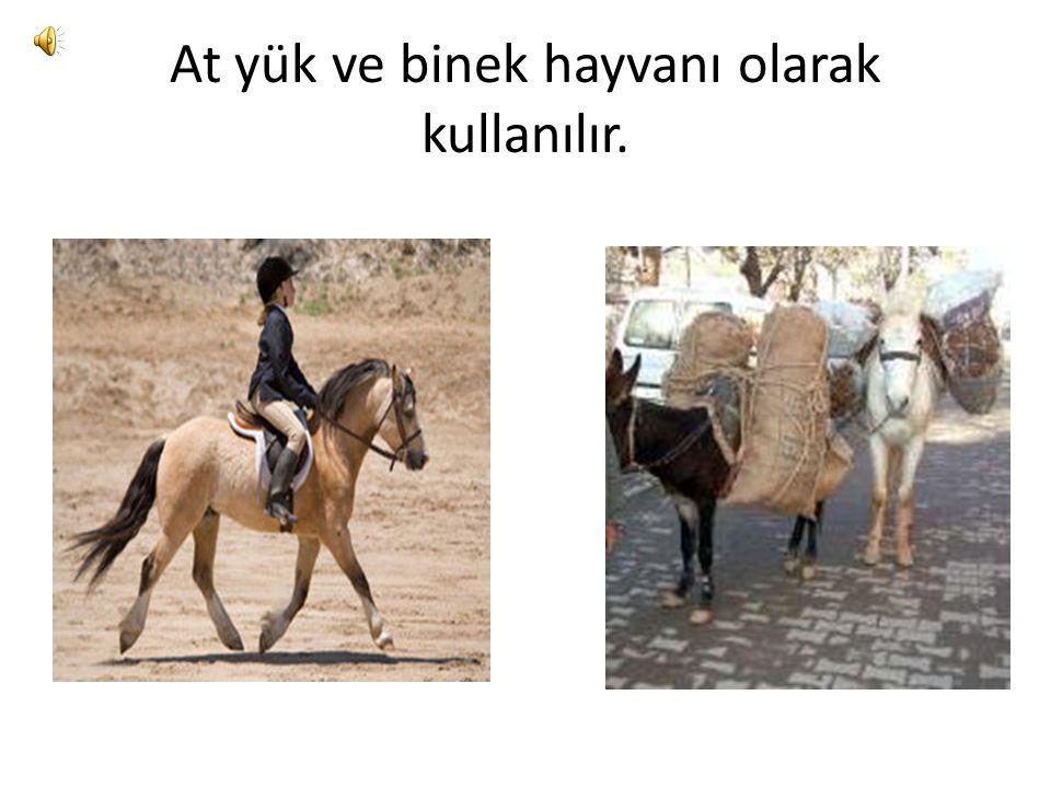 At yük ve binek hayvanı olarak kullanılır.