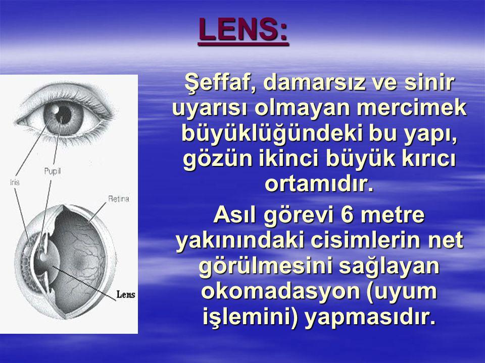 Şeffaf, damarsız ve sinir uyarısı olmayan mercimek büyüklüğündeki bu yapı, gözün ikinci büyük kırıcı ortamıdır.