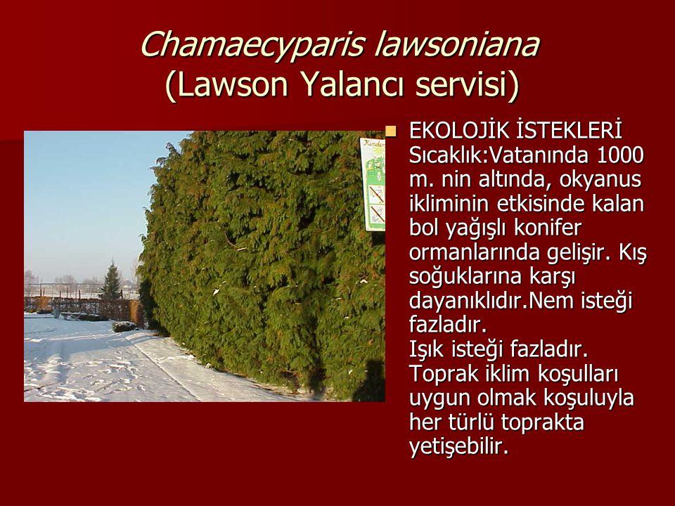 Chamaecyparis lawsoniana (Lawson Yalancı servisi)  EKOLOJİK İSTEKLERİ Sıcaklık:Vatanında 1000 m. nin altında, okyanus ikliminin etkisinde kalan bol y