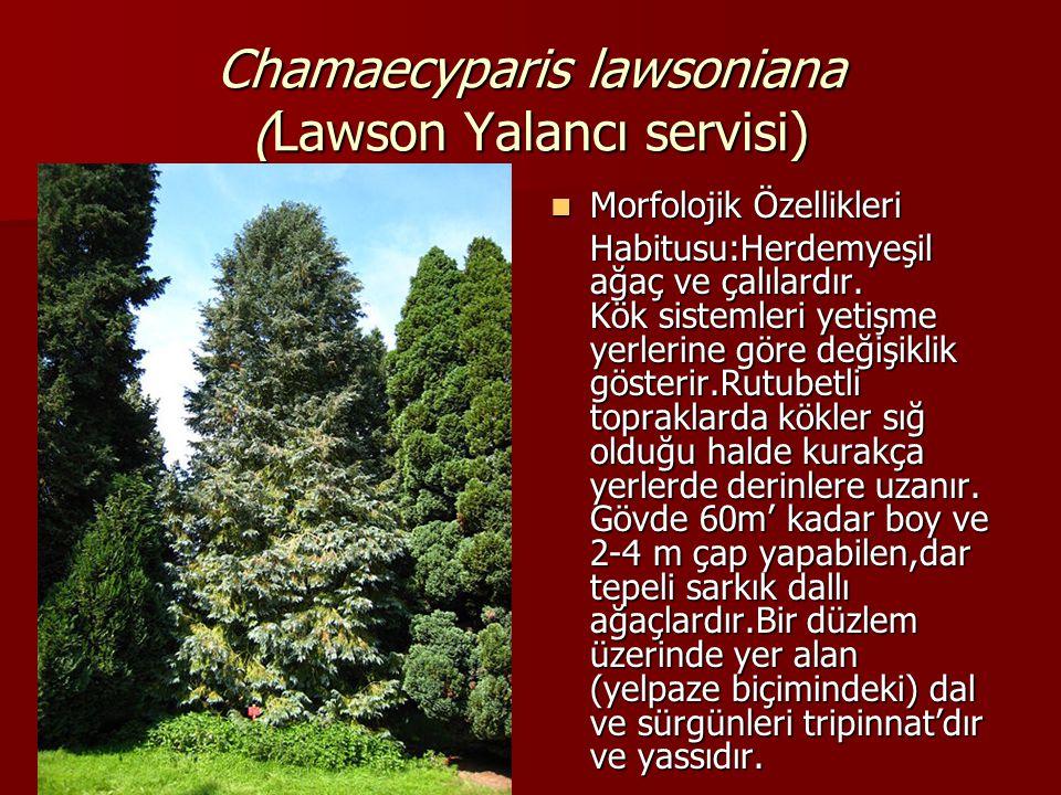 Chamaecyparis lawsoniana (Lawson Yalancı servisi)  Sürgünlere karşılıklı olarak sıkıca yerleşmiş olan pul yaprakların sırtlarında, uzunca bir yarık ve içerisinde yağ bezeleri vardır(sürgünler ışığa doğru tutulduğu bu yağ bezeleri daha belirgin olarak görülür).Sürgünler ve yaprak ovuşturulduğunda, reçine ile karışık kuvvetli maydanoz kokusuna benzer bir koku alınır.