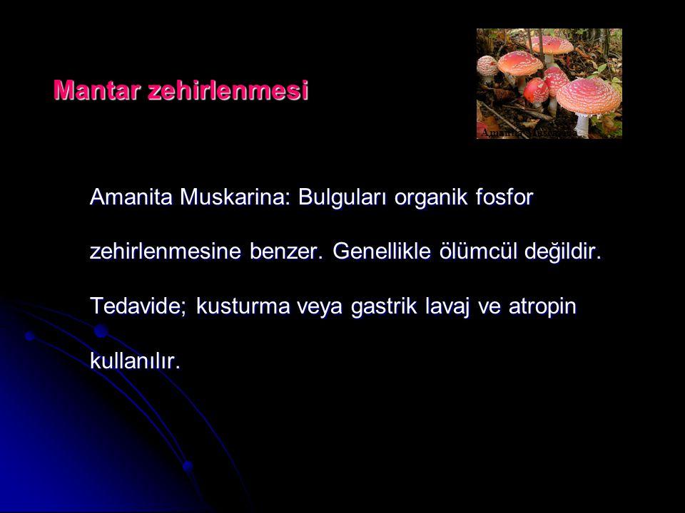 Amanita Muskarina: Bulguları organik fosfor zehirlenmesine benzer.