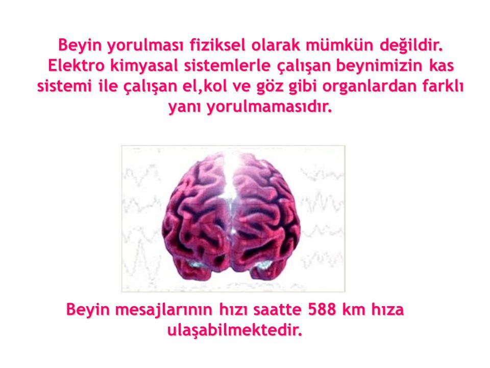 Beyin mesajlarının hızı saatte 588 km hıza ulaşabilmektedir. Beyin yorulması fiziksel olarak mümkün değildir. Elektro kimyasal sistemlerle çalışan bey