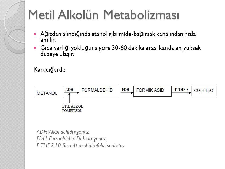 Metil Alkolün Metabolizması  A ğ ızdan alındı ğ ında etanol gibi mide-ba ğ ırsak kanalından hızla emilir.  Gıda varlı ğ ı yoklu ğ una göre 30-60 dak