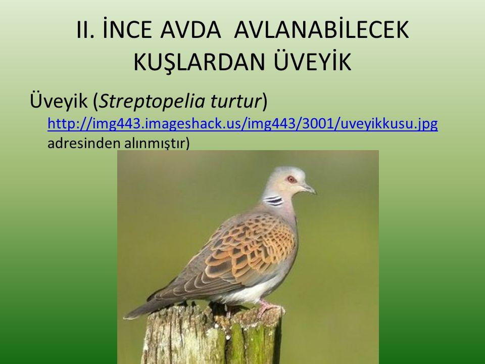 II. İNCE AVDA AVLANABİLECEK KUŞLARDAN ÜVEYİK Üveyik (Streptopelia turtur) http://img443.imageshack.us/img443/3001/uveyikkusu.jpg adresinden alınmıştır