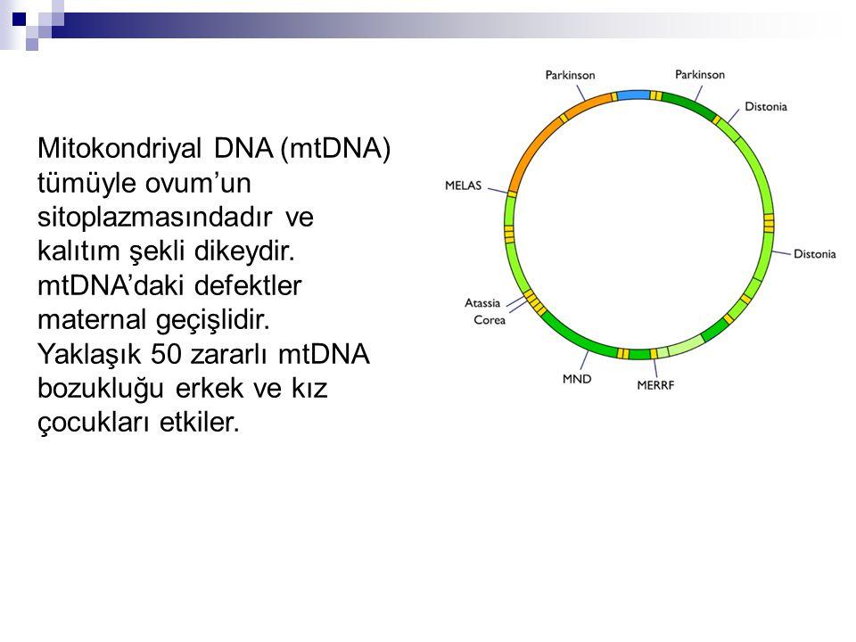 Mitokondriyal DNA (mtDNA) tümüyle ovum'un sitoplazmasındadır ve kalıtım şekli dikeydir. mtDNA'daki defektler maternal geçişlidir. Yaklaşık 50 zararlı