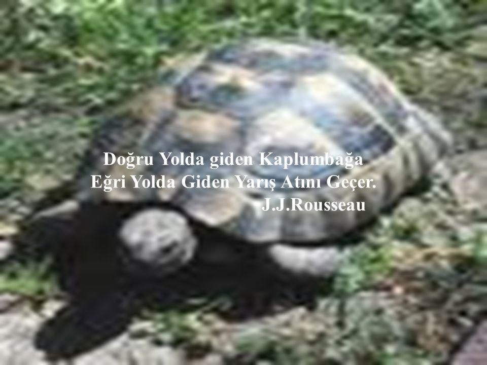 26 Doğru Yolda giden Kaplumbağa Eğri Yolda Giden Yarış Atını Geçer. J.J.Rousseau