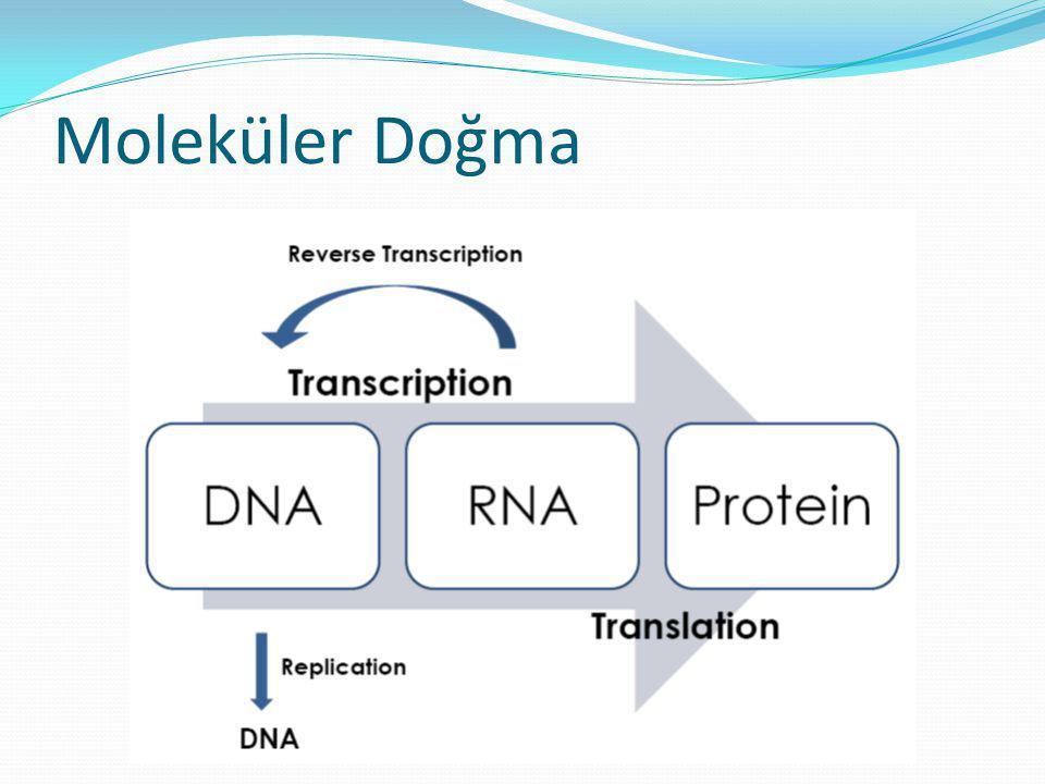  Sarflar  Filtreli pipet ucu kullanılmalı  DNaz-free ve RNaz-free sertifikalı olmalı  Cam malzemeler 0.1% diethyl pyrocarbonate (DEPC) ile yıkanmalı  Reaktifler  Otoklav yetersizdir  Kimyasal ve sarflar, DNaz-free ve RNaz-free sertifikalı olmalı,  DEPC iyi bir RNaz inhibitörüdür  Su, reaktif ve solusyonlar mutlaka DEPC içermeli,  0.05–0.1% DEPC ilave edilebilir (Tris ve EDTA tamponlar hariç)