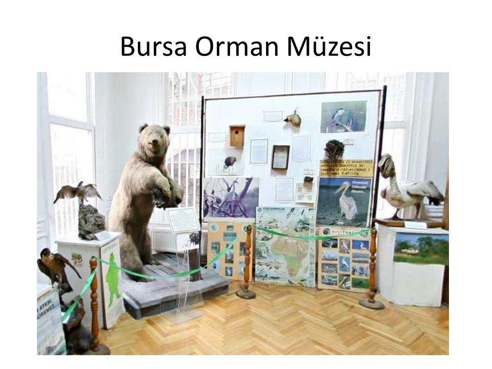 Bursa Orman Müzesi