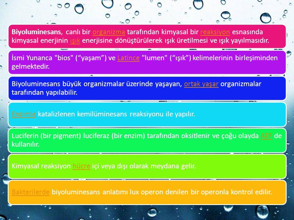 Powerpoint Templates Biyoluminesans, canlı bir organizma tarafından kimyasal bir reaksiyon esnasında kimyasal enerjinin ışık enerjisine dönüştürülerek