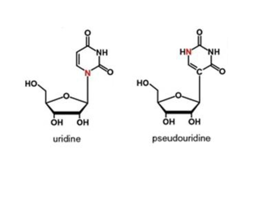 Assessment of the Concentration of Pseudouridine in Urine