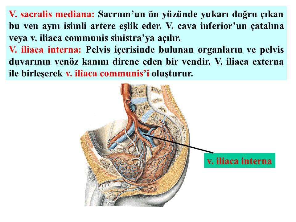 Schön A. Iliaca Interna Mnemonic Ideen - Anatomie und Physiologie ...