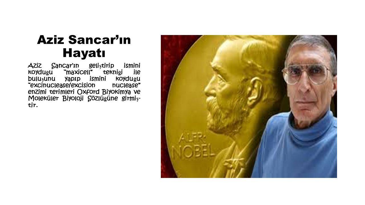 Aziz Sancar'ın Hayatı Aziz Sancar'ın geli ş tirip ismini koydu ğ u maxicell tekni ğ i ile bulu ş unu yapıp ismini koydu ğ u excinuclease/excision nuclease enzimi terimleri Oxford Biyokimya ve Moleküler Biyoloji Sözlü ğ üne girmi ş - tir.