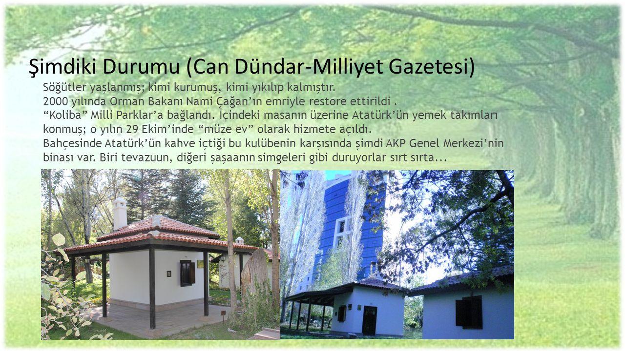 Şimdiki Durumu (Can Dündar-Milliyet Gazetesi) Söğütler yaşlanmış; kimi kurumuş, kimi yıkılıp kalmıştır. 2000 yılında Orman Bakanı Nami Çağan'ın emriyl