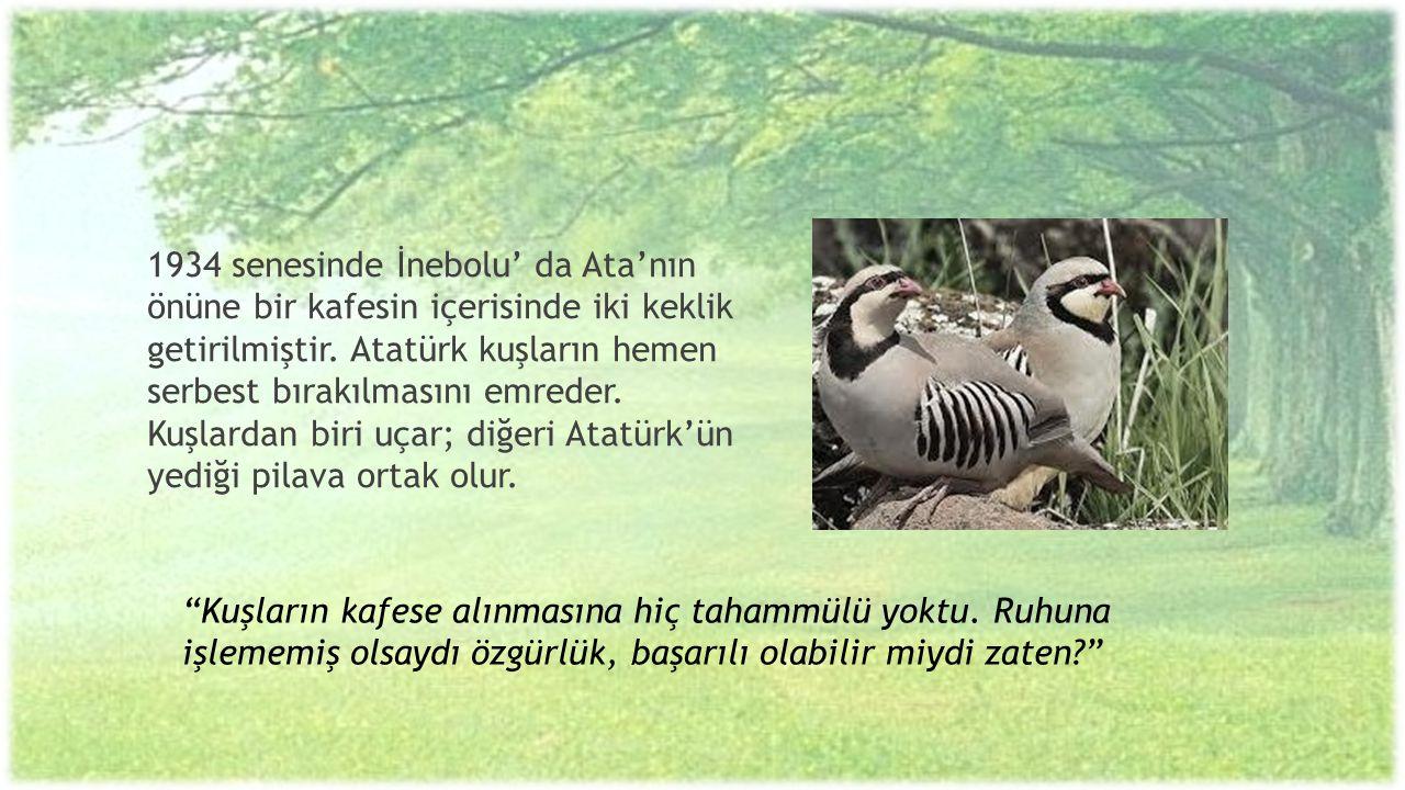 1934 senesinde İnebolu' da Ata'nın önüne bir kafesin içerisinde iki keklik getirilmiştir. Atatürk kuşların hemen serbest bırakılmasını emreder. Kuşlar